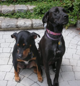 Jasper and Elsie in Sit_large